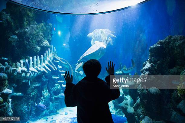 Boy admiring sea life in aquarium
