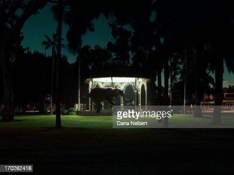 Boy and elephant playing in park gazebo : Stock Photo