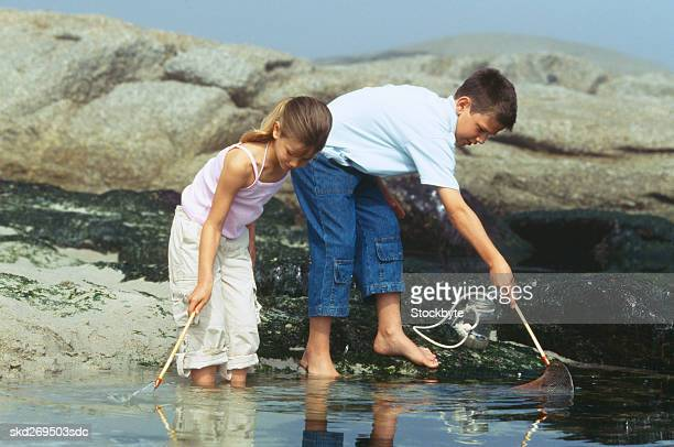 Boy (10-11) and girl (8-9) fishing with nets in a rock pool