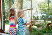 Little boy and girl watch funny macaque monkeys on day trip to a zoo. Kids watching wild animals at wildlife safari park. Children feed monkey. Kid with pet animal. Child looking at macaques.