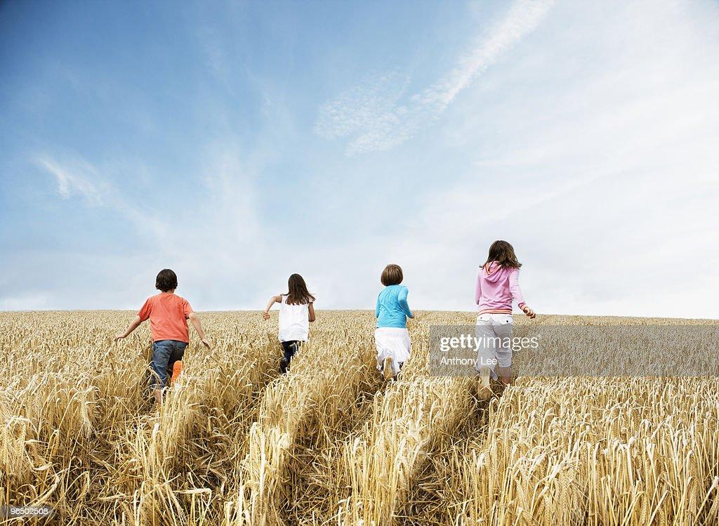 Boy and girls walking away in wheat field