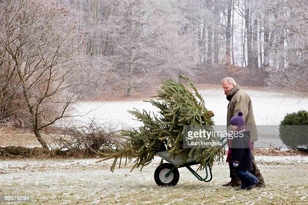 boy and grandfather with christmas tree