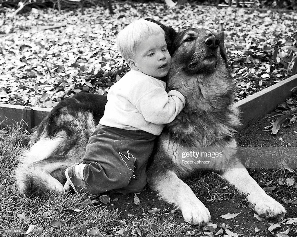 Boy and his shepherd : Stock Photo