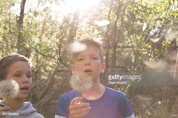 Boy Blowing Away Dandelion Seeds