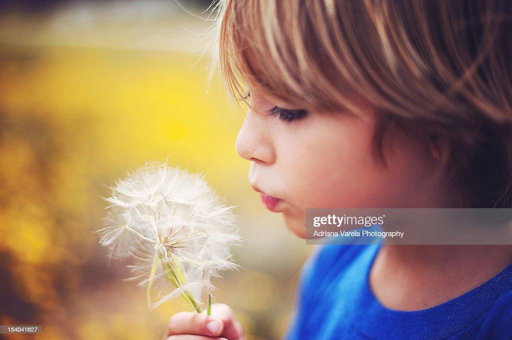 Boy blowing dandelion seeds : Stock Photo