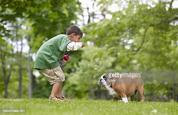 Boy (6-8) blowing soap bubbles for English bulldog puppy, side view