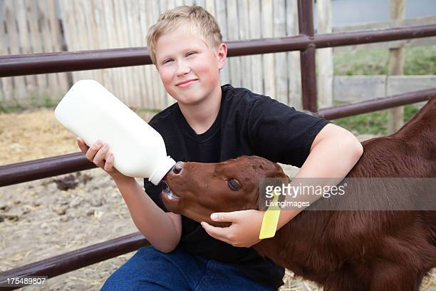 Boy Bottle Feeding a Calf