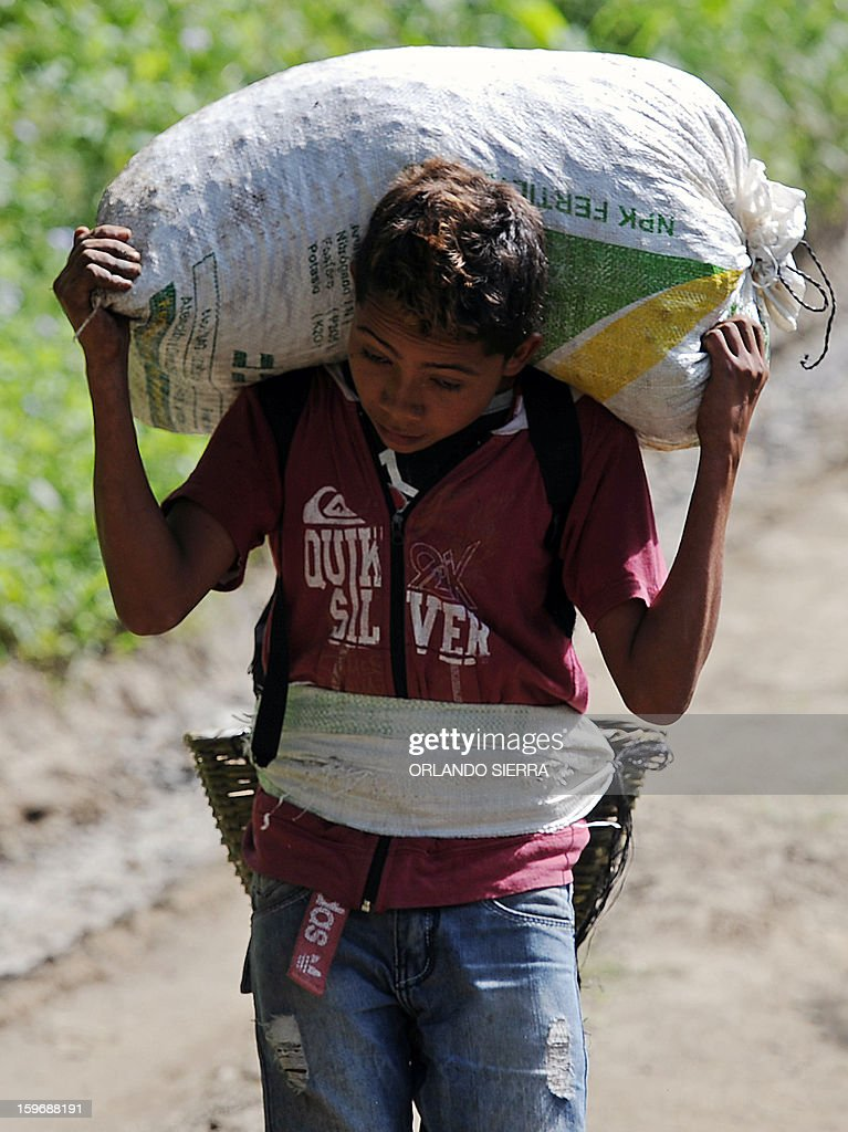 A boy carries a sack of coffee beans during harvest in the department El Paraiso, 110 kms east of Tegucigalpa, on Januray 17, 2013. Central America, one of main producers of the best Arabica Coffee, is analyzing to take measures to combat the Roya (Puccinia graminis) blight already threatening more than one third of the bean crop, one of the region's major export items. AFP PHOTO/Orlando SIERRA