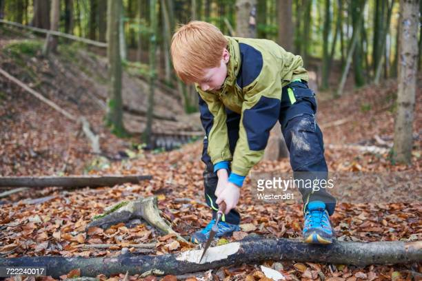 Boy chopping wood in forest