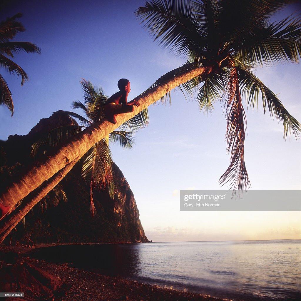 boy climbing palm tree : Stock Photo