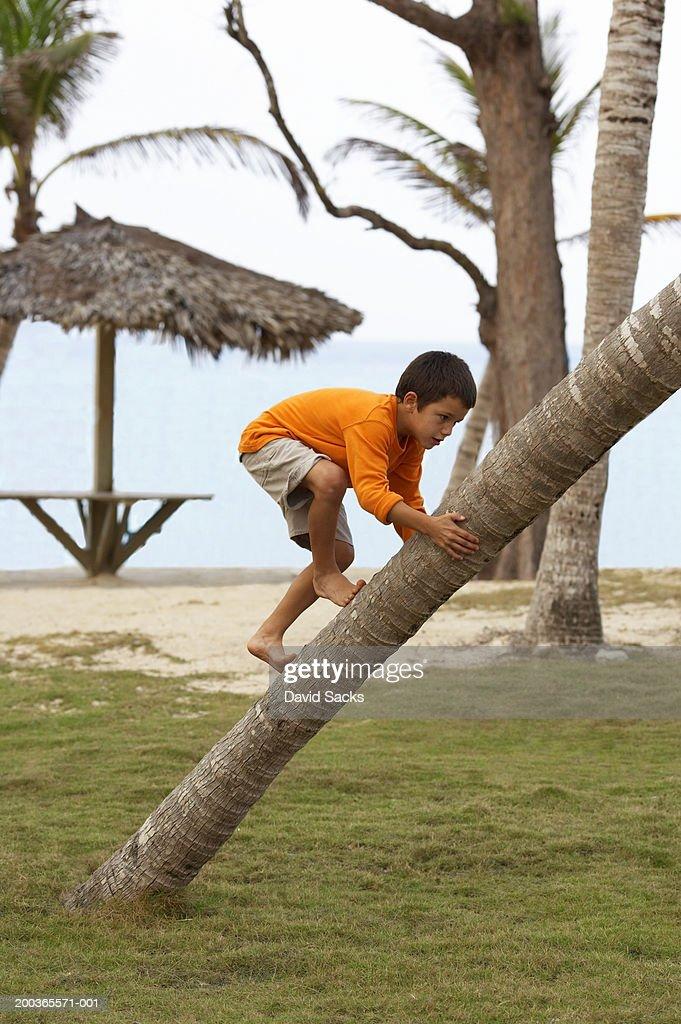 Boy (5-7) climbing palm tree, side view : Stock-Foto
