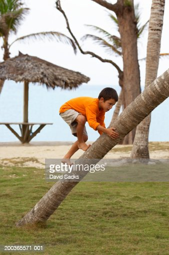 Boy (5-7) climbing palm tree, side view : Stock Photo