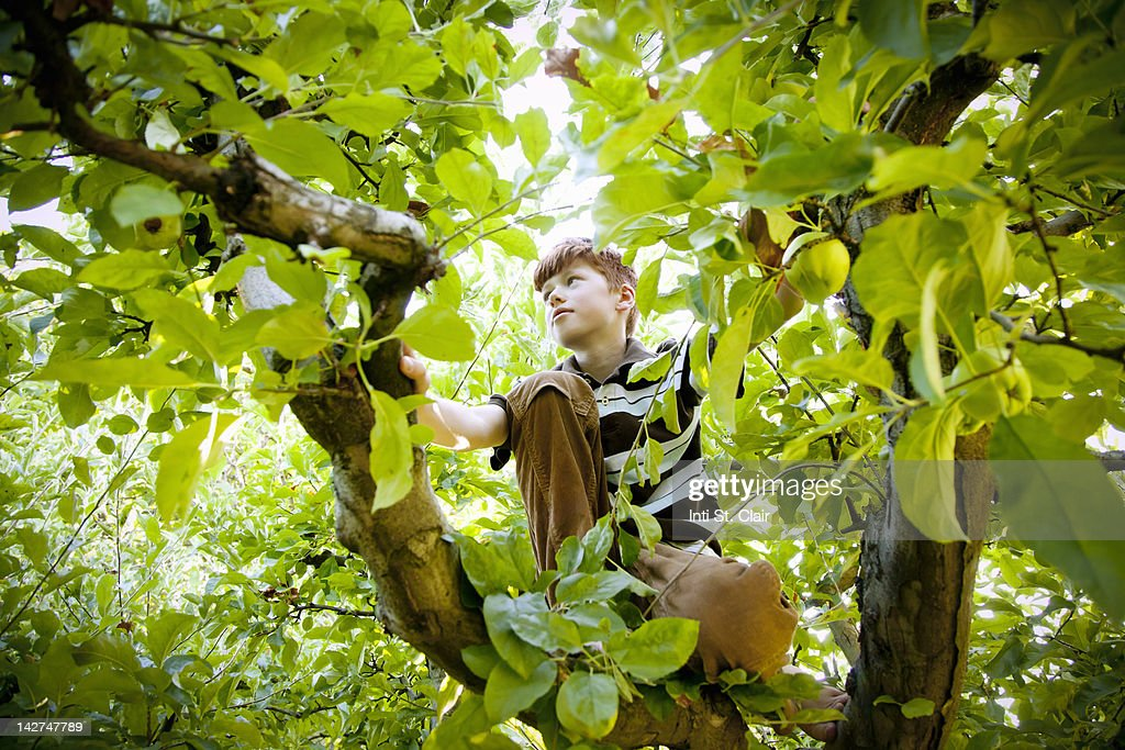 Boy (12-13) climbing tree : Stock Photo