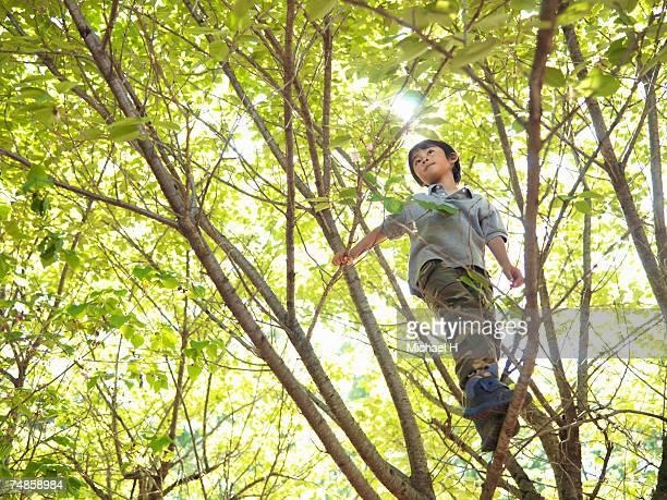 Boy (6-7) climbing tree
