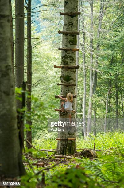 Boy climbing up ladder in the  tree, Carpathians mountains, Transylvania, Romania
