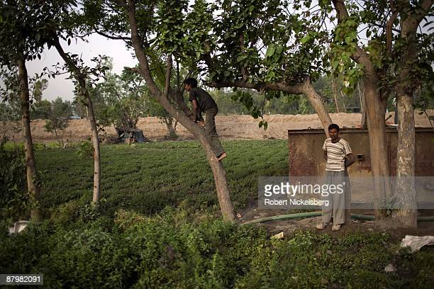 A boy climbs a fruit tree in a slum area near a newly dug roadway April 21 2009 where agricultural areas he and members of twelve families have been...