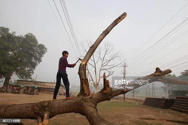 A boy cutting a tree branch in the foggy morning in Allahabad