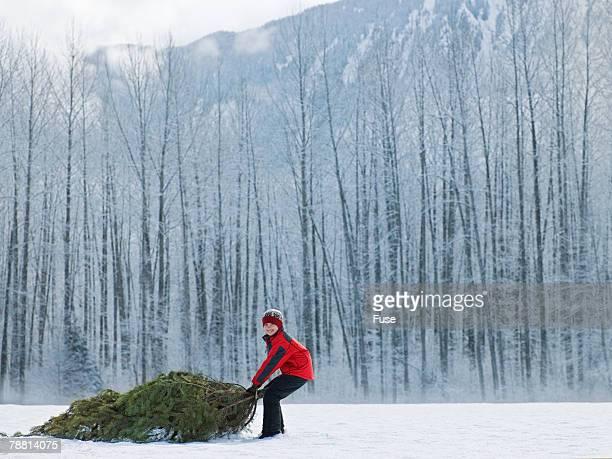 Boy Dragging Christmas Tree