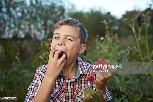 Boy eating handfull of rasberries