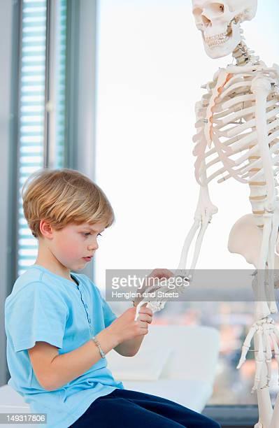 Menino examinando o esqueleto pelo médico
