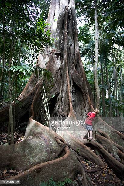 Boy Exploring Large Tree Roots