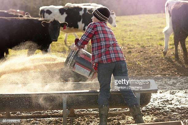Boy farmer throwing grain into feeding trough in field