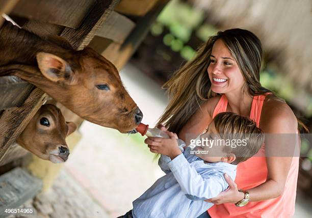 Boy feeding a cow