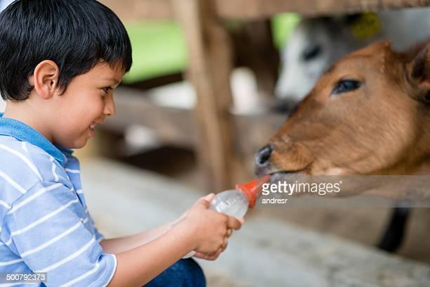 Junge Füttern eine Kuh