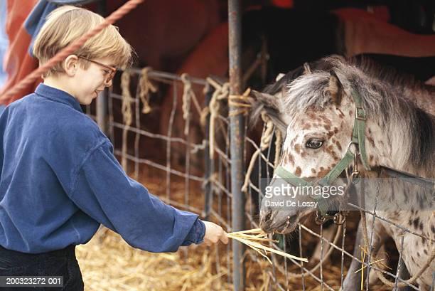 Boy (12-13) feeding horse in stable