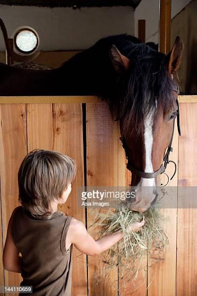 Junge Füttern horse