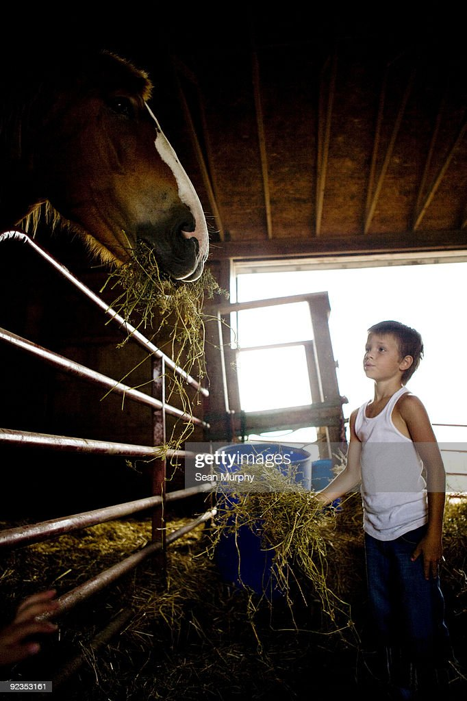 Boy feeding horse : Stock Photo