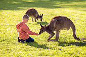 Little kid sitting on the ground and feeding kangaroo.