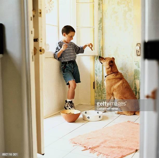 Boy (6-8) feeding mixed breed dog cookie in kitchen