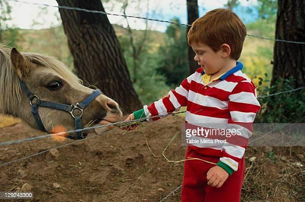Boy feeding pony