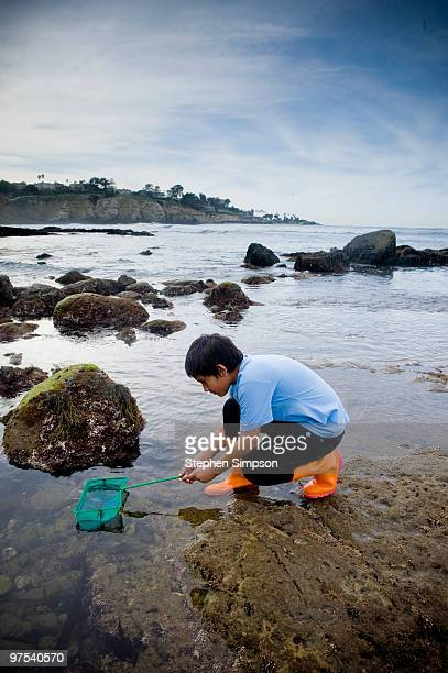 boy gathering samples in tide pool