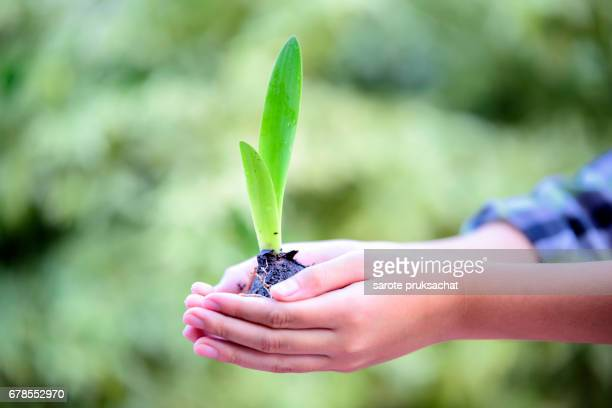 Boy hand ,plant and nature background , Ecology concept .