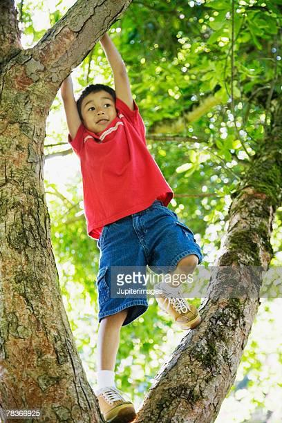 Boy hanging from tree branch