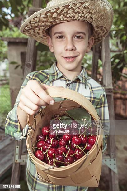 Boy harvesting Morello Cherries