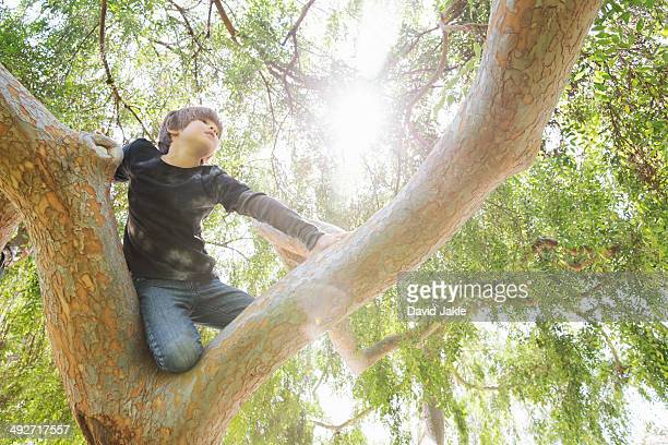 Boy hiding in sunlit tree gazing into distance