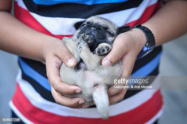 Boy Holding a Baby Pug Close-up Image While the Pug Puppy Sleeping