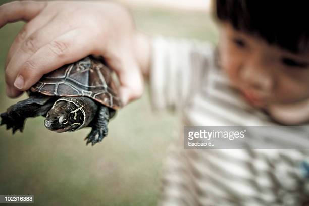 Boy holding a turtle
