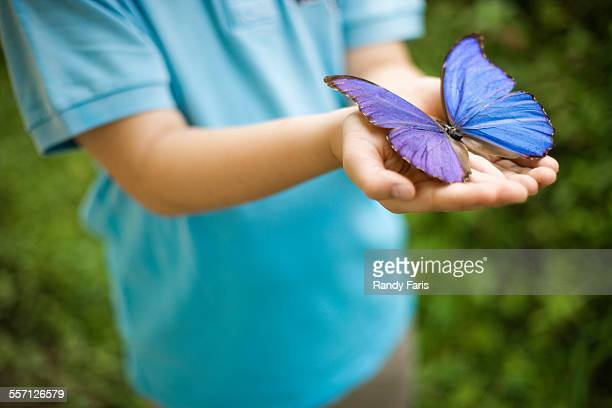 Boy Holding Blue Morpho Butterfly