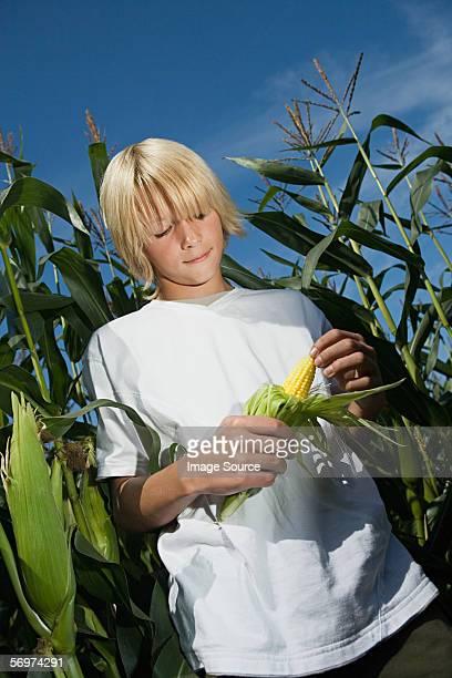 Boy holding fresh corn on the cob