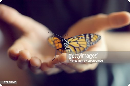 boy holding monarch butterfly