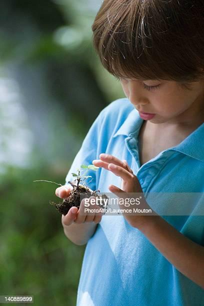 Boy holding plant seedling