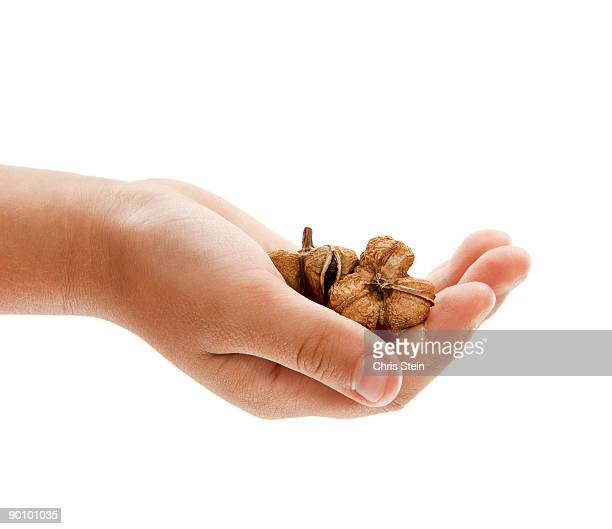 Boy holding seed pods