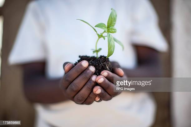 少年包まれた芽が表す希望を持つ手、南アフリカ、ケープタウン