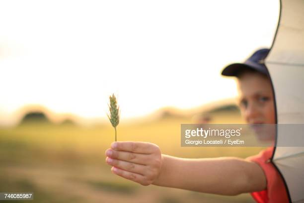 Boy Holding Wheat Crop Against Sky