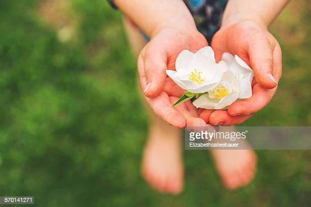 Boy holding white blossoms in his hand