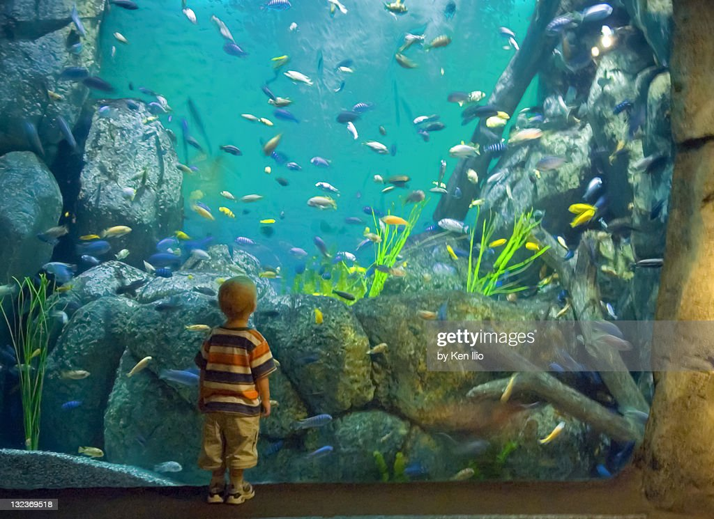 Boy in aquarium  of colorful fish swimming : Stock Photo